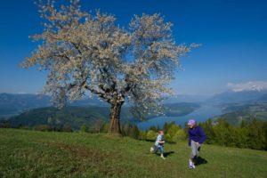 Wandern in Kärnten - Mitllstättersee